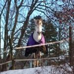 Hästens närvaro